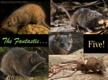the fantastic five species raw for webpage aa